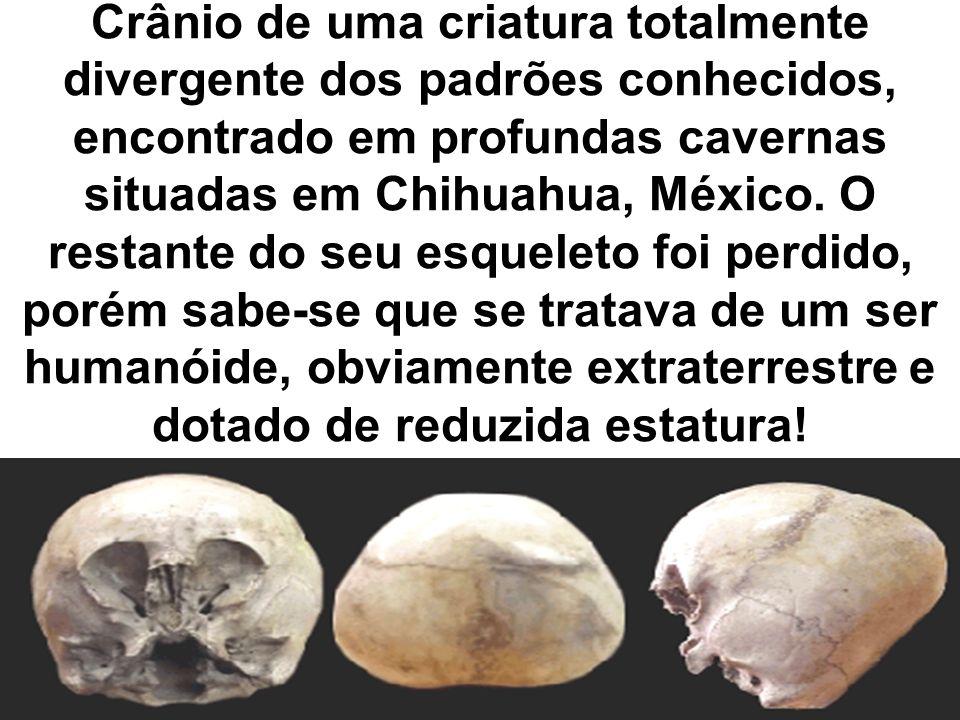 Crânio de uma criatura totalmente divergente dos padrões conhecidos, encontrado em profundas cavernas situadas em Chihuahua, México.