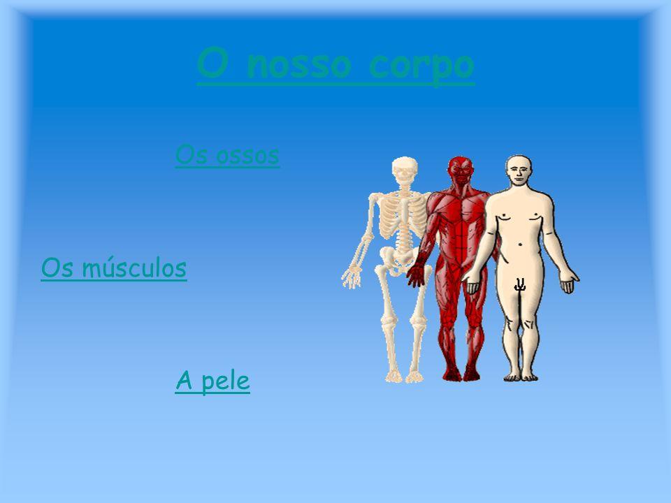O nosso corpo Os ossos Os músculos A pele