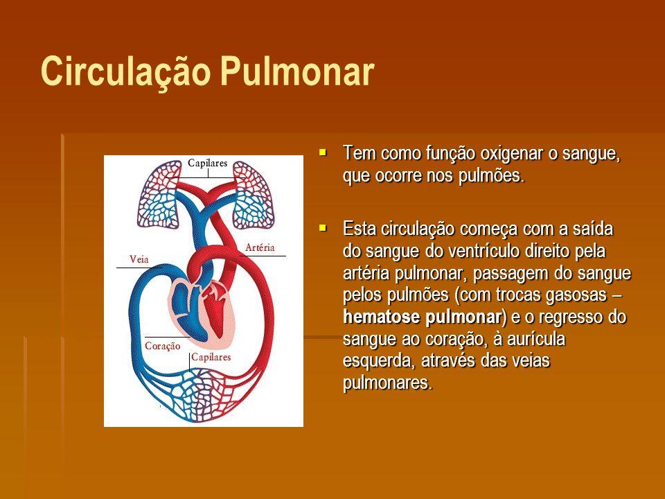 Circulação Pulmonar Tem como função oxigenar o sangue, que ocorre nos pulmões.