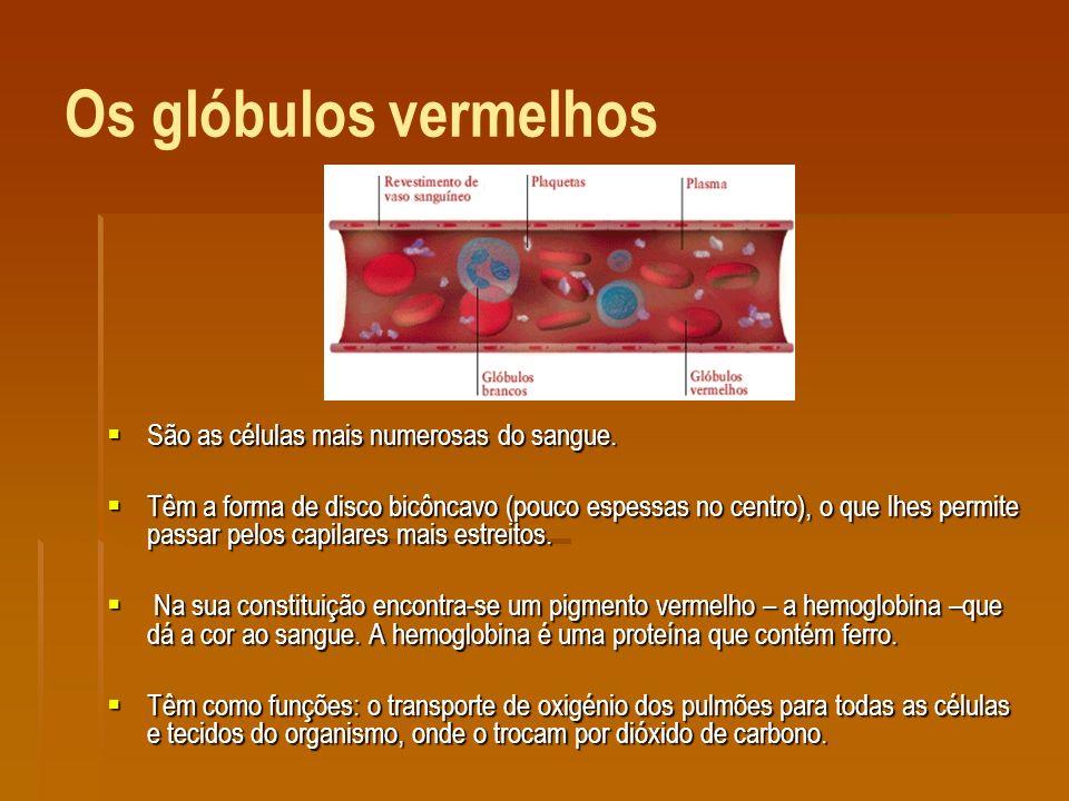 Os glóbulos vermelhos São as células mais numerosas do sangue.