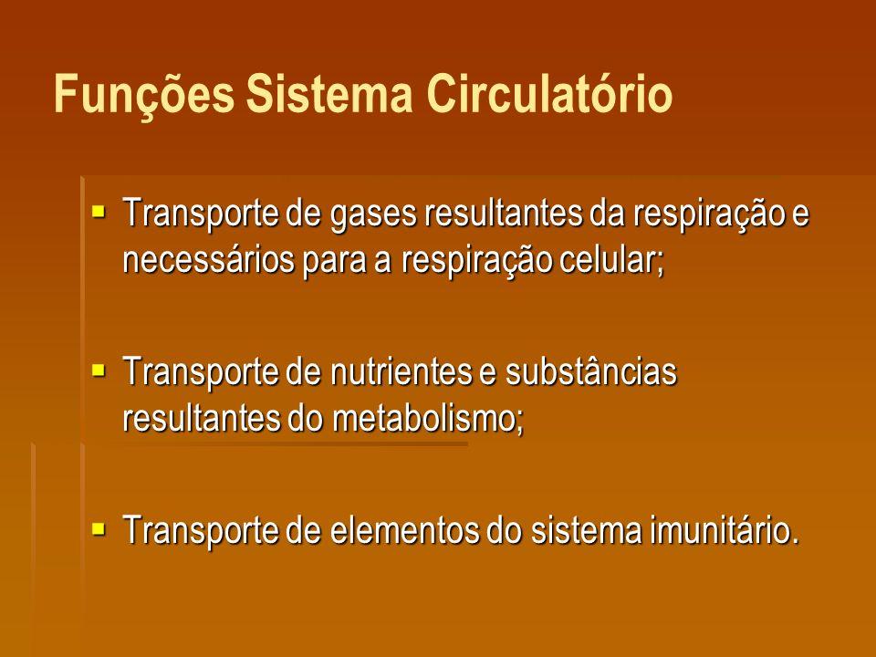 Funções Sistema Circulatório