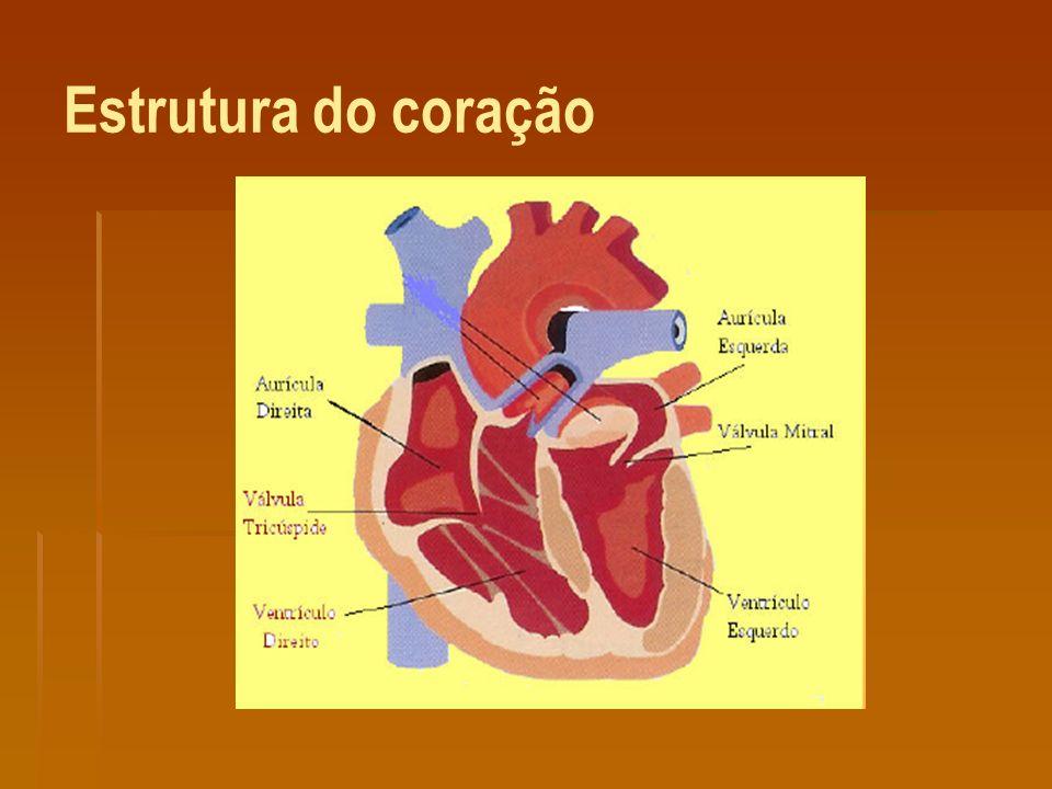 Estrutura do coração