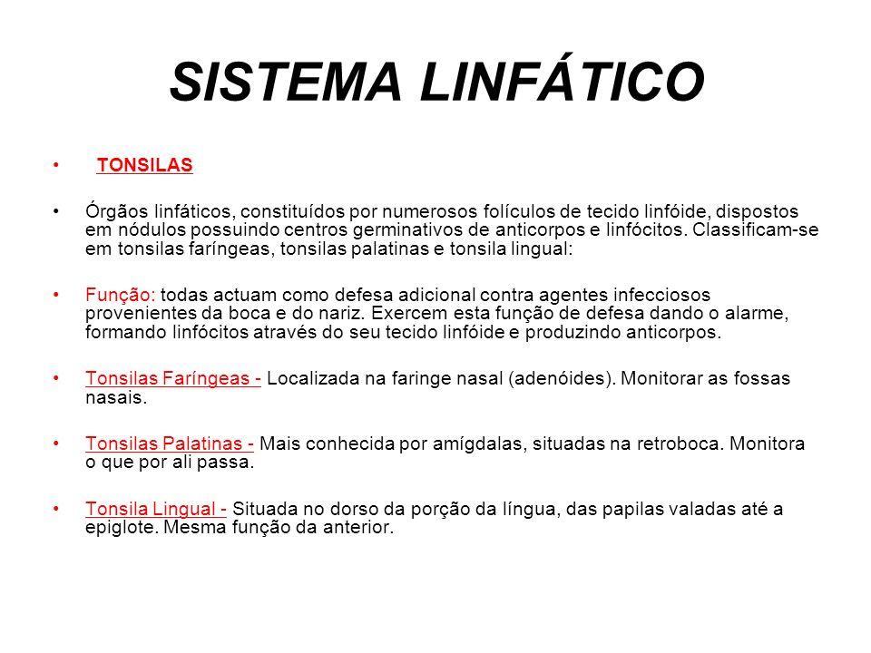 SISTEMA LINFÁTICO TONSILAS