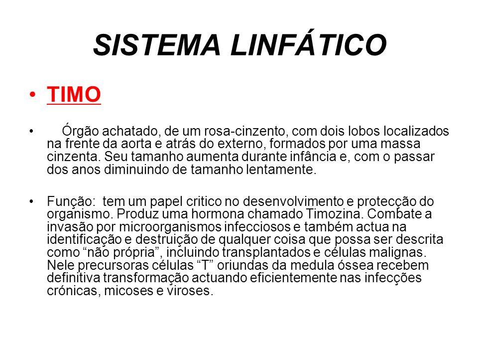 SISTEMA LINFÁTICO TIMO