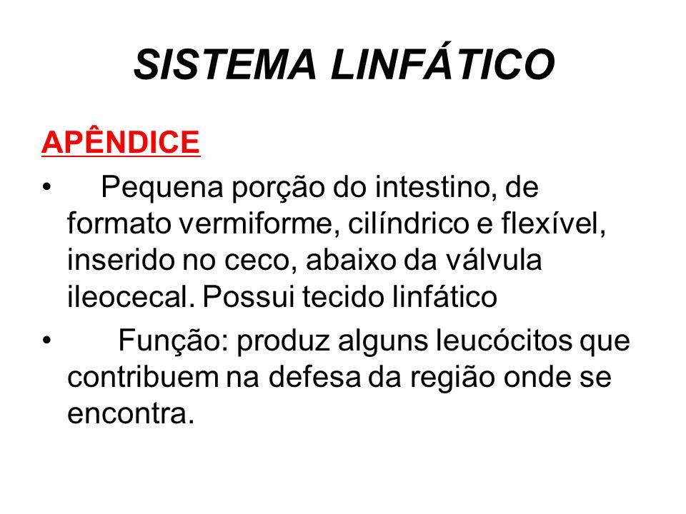 SISTEMA LINFÁTICO APÊNDICE