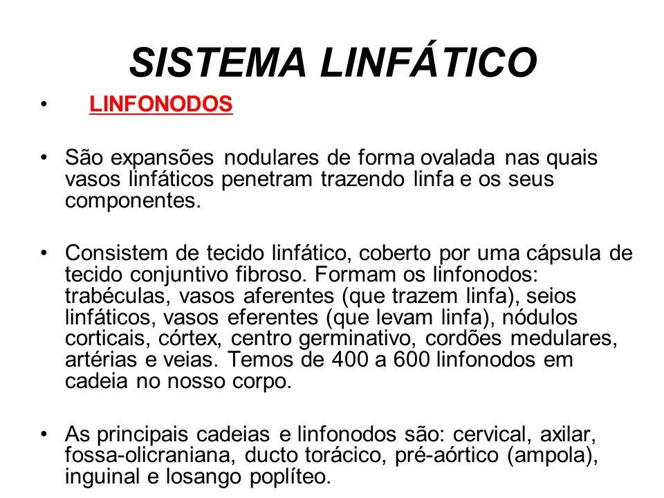 SISTEMA LINFÁTICO LINFONODOS