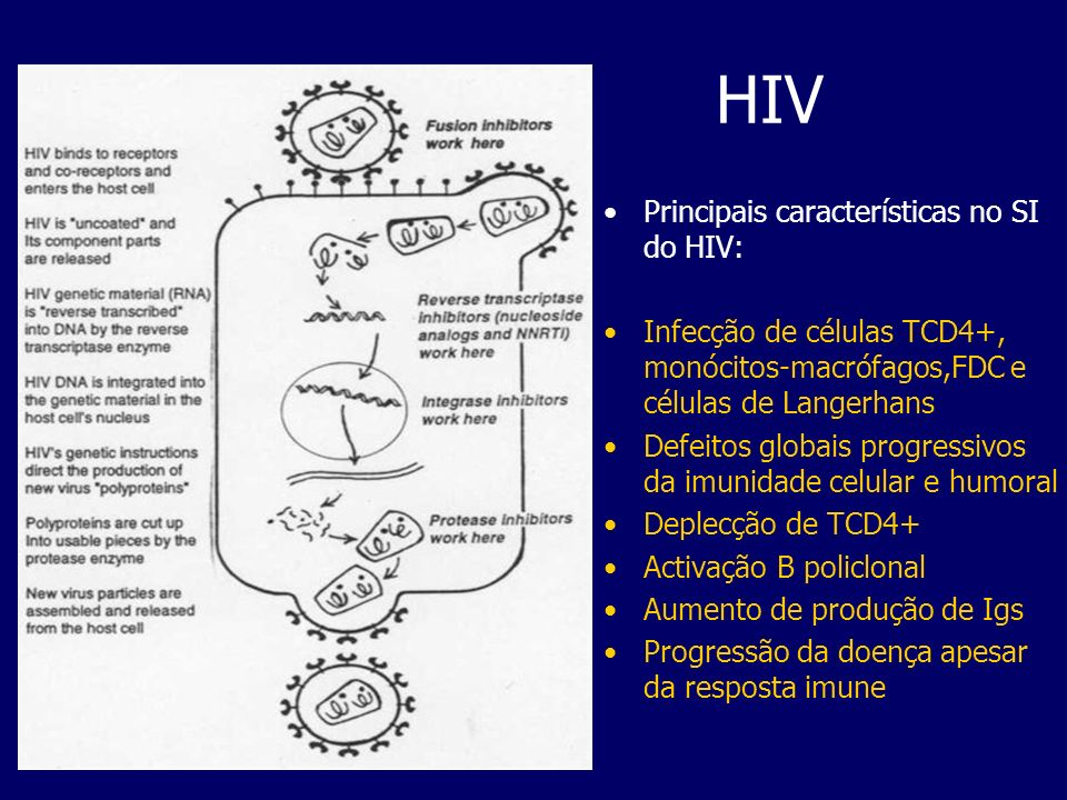 HIV Principais características no SI do HIV: