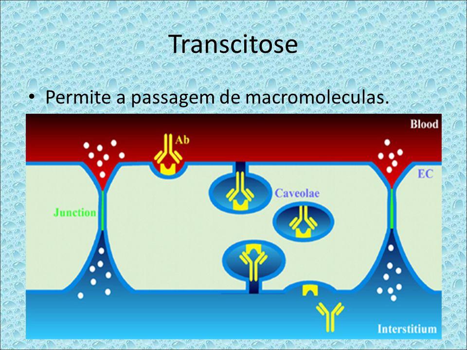Transcitose Permite a passagem de macromoleculas.