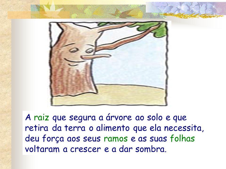 A raiz que segura a árvore ao solo e que retira da terra o alimento que ela necessita, deu força aos seus ramos e as suas folhas voltaram a crescer e a dar sombra.