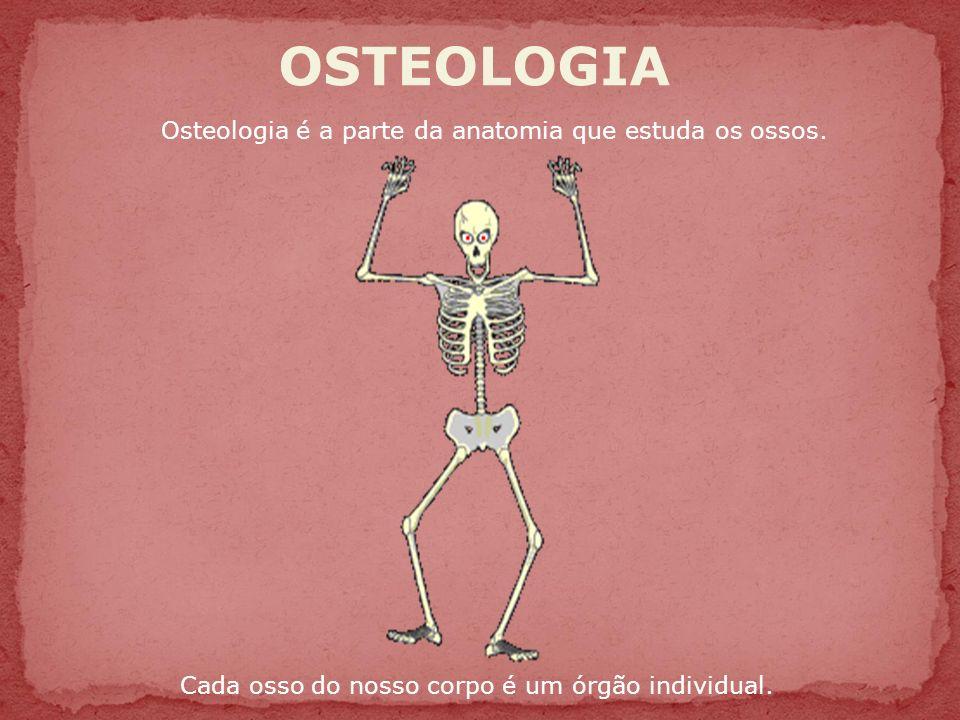 Fantástico Anatomía Qué Es Lo Embellecimiento - Imágenes de Anatomía ...