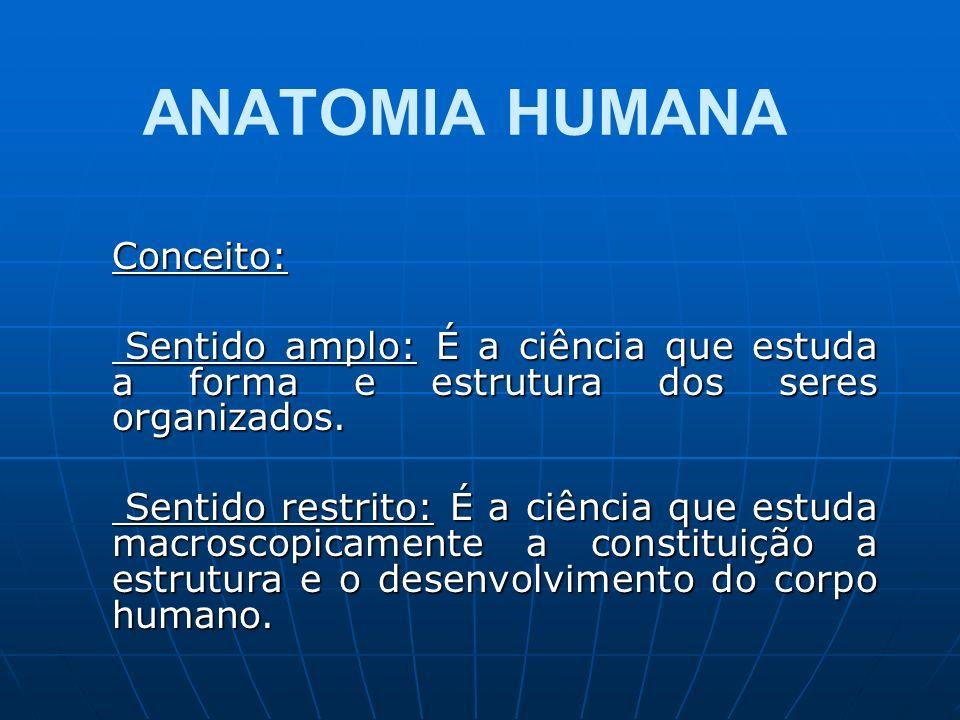 ANATOMIA HUMANA Conceito: