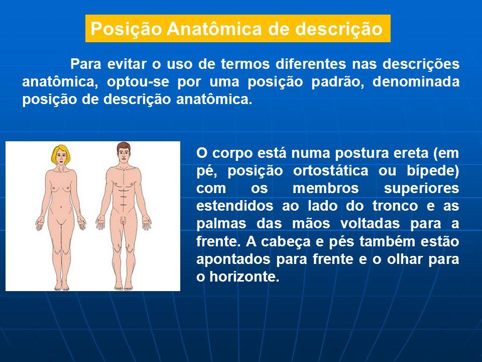 Posição Anatômica de descrição