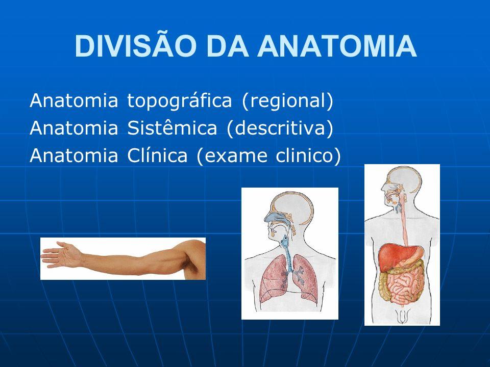 DIVISÃO DA ANATOMIA Anatomia topográfica (regional)
