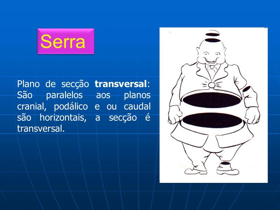 Serra Plano de secção transversal: São paralelos aos planos cranial, podálico e ou caudal são horizontais, a secção é transversal.