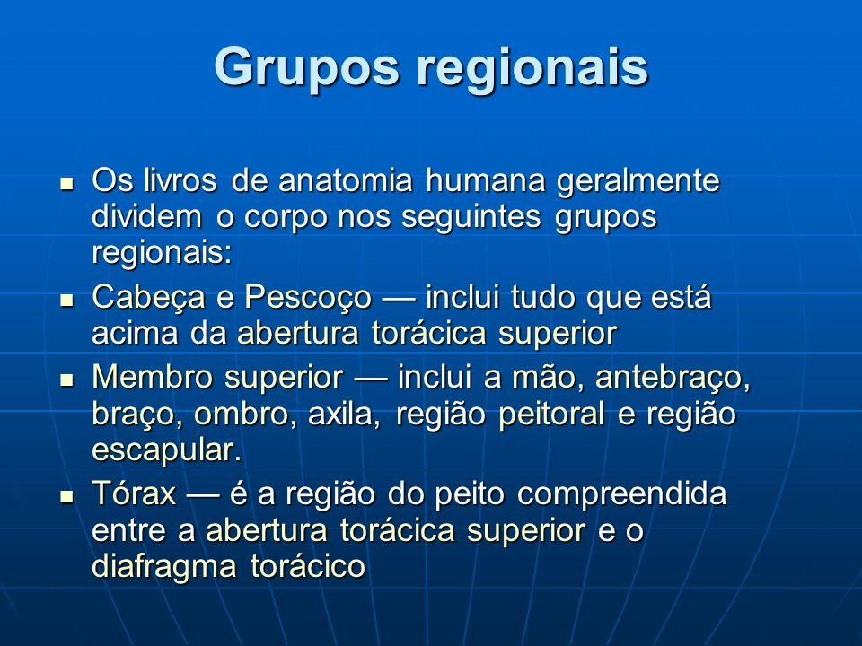 Grupos regionais Os livros de anatomia humana geralmente dividem o corpo nos seguintes grupos regionais: