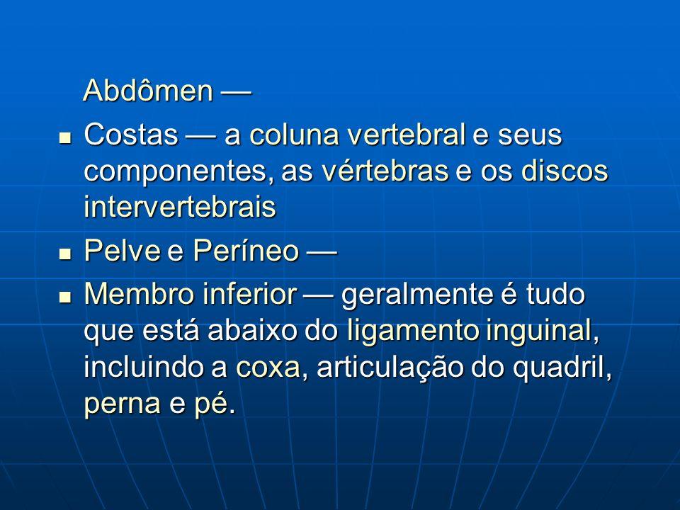 Abdômen — Costas — a coluna vertebral e seus componentes, as vértebras e os discos intervertebrais.
