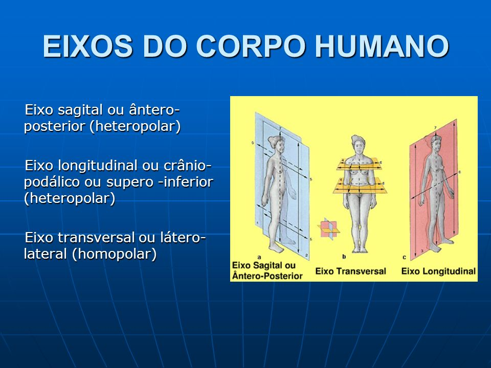 EIXOS DO CORPO HUMANO Eixo sagital ou ântero-posterior (heteropolar)