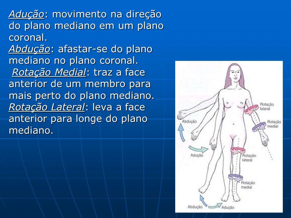 Adução: movimento na direção do plano mediano em um plano coronal.