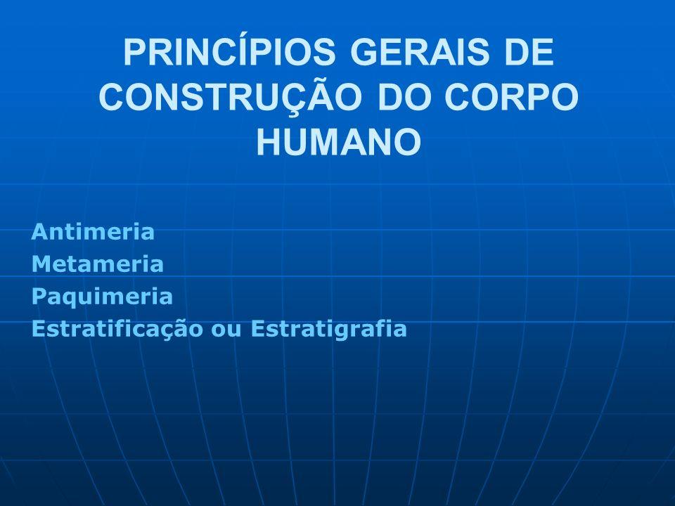 PRINCÍPIOS GERAIS DE CONSTRUÇÃO DO CORPO HUMANO