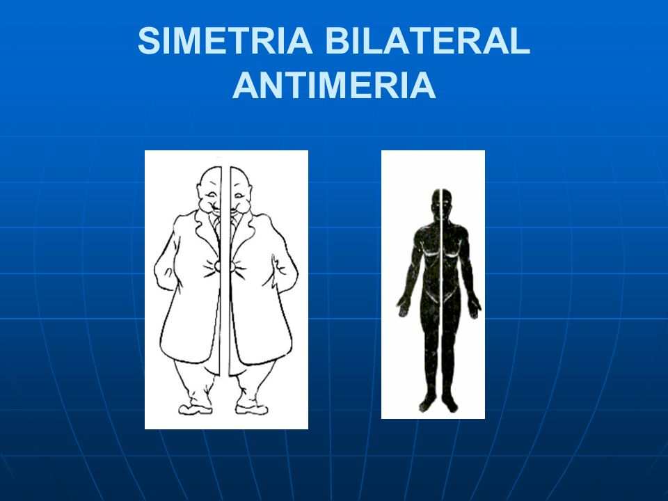 SIMETRIA BILATERAL ANTIMERIA