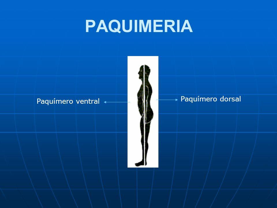 PAQUIMERIA Paquímero dorsal Paquímero ventral