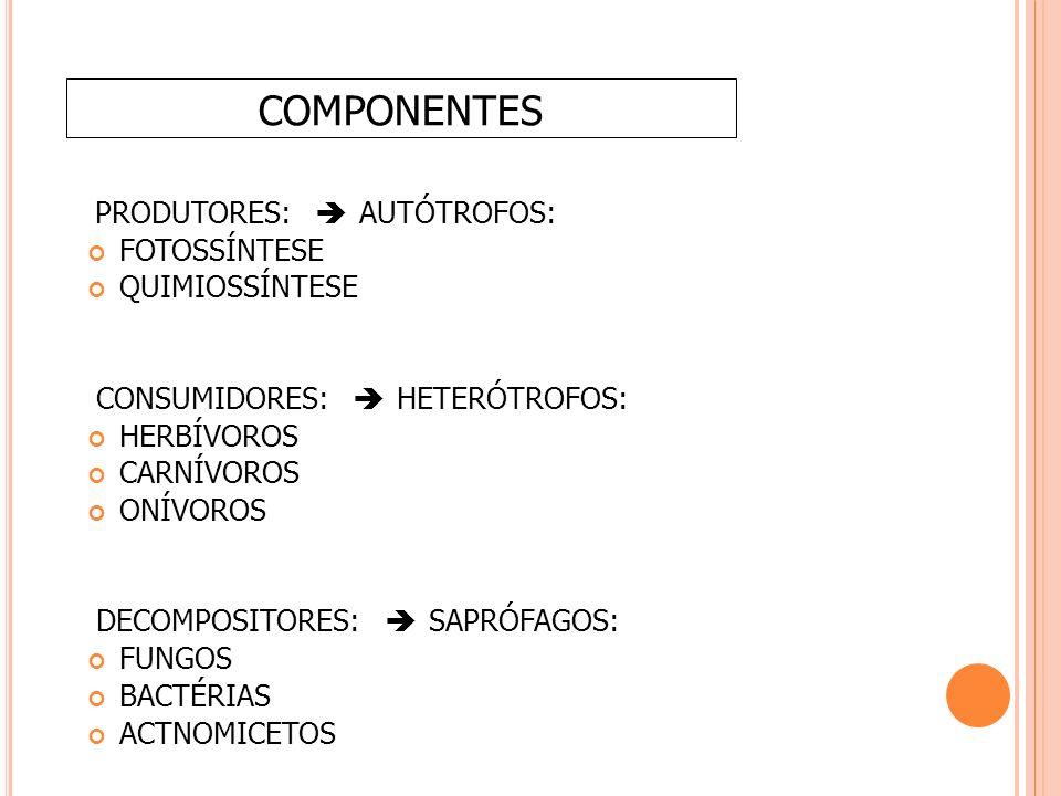 COMPONENTES PRODUTORES: è AUTÓTROFOS: FOTOSSÍNTESE QUIMIOSSÍNTESE