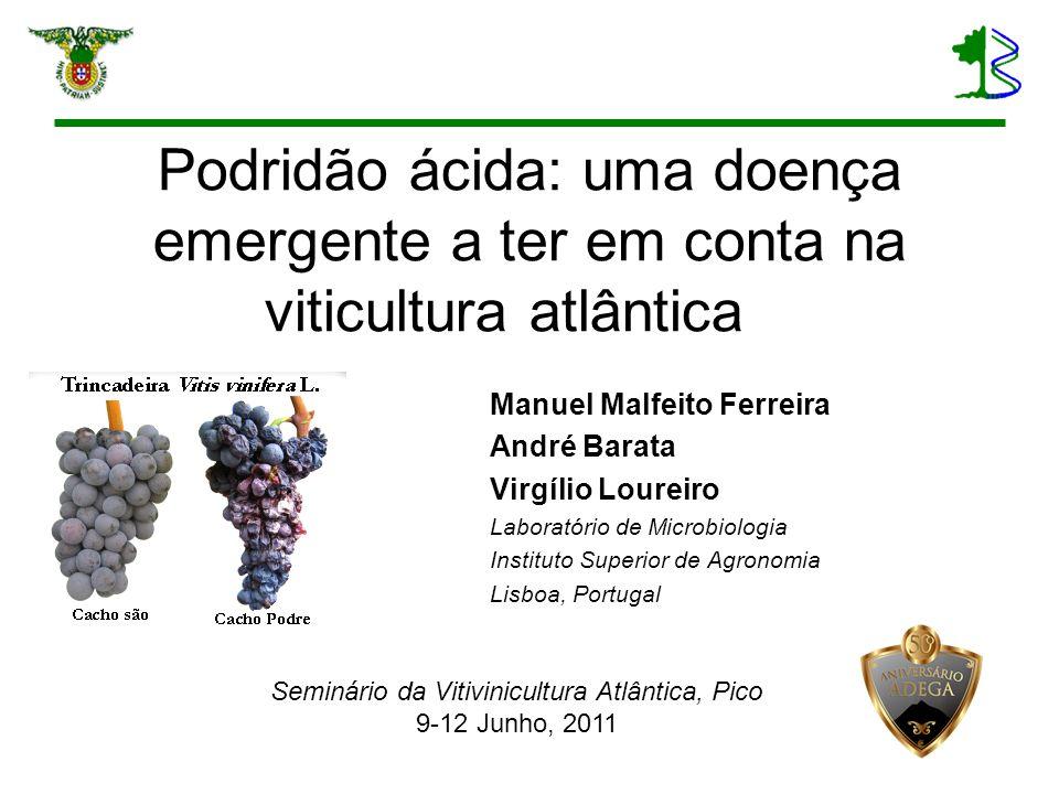 Seminário da Vitivinicultura Atlântica, Pico