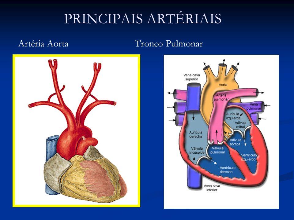 Dorable Función Tronco Pulmonar Imagen - Anatomía de Las Imágenesdel ...