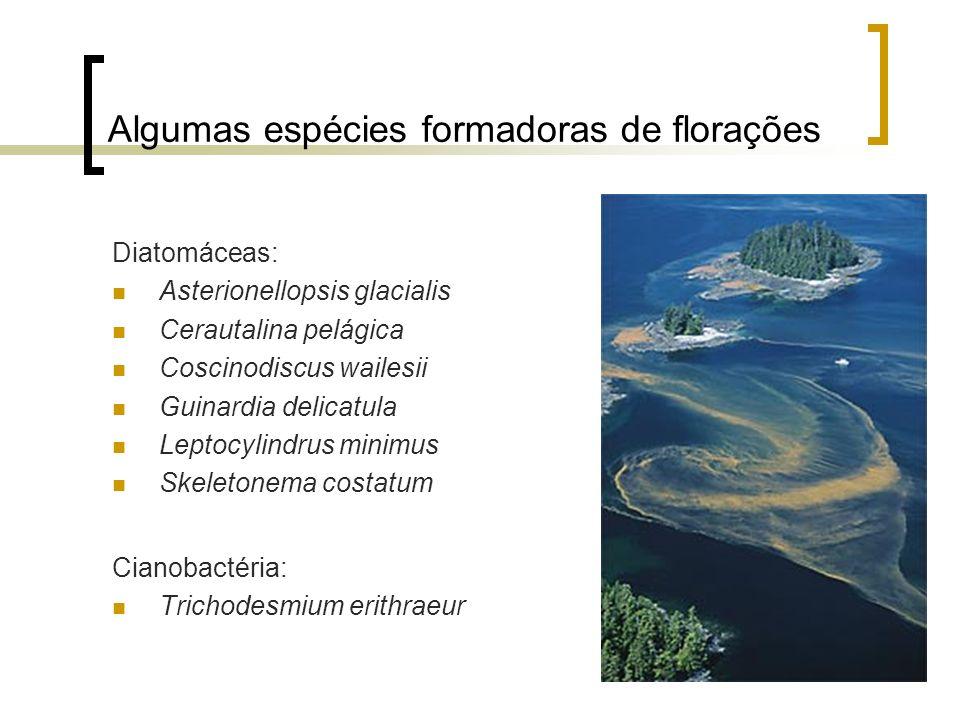 Algumas espécies formadoras de florações