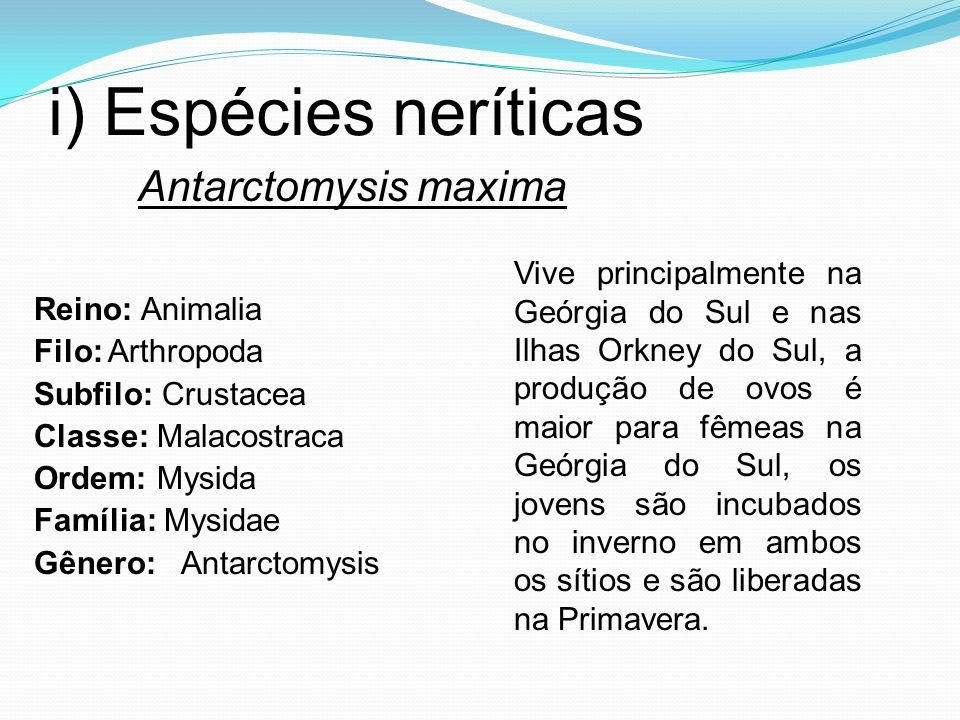 i) Espécies neríticas Antarctomysis maxima