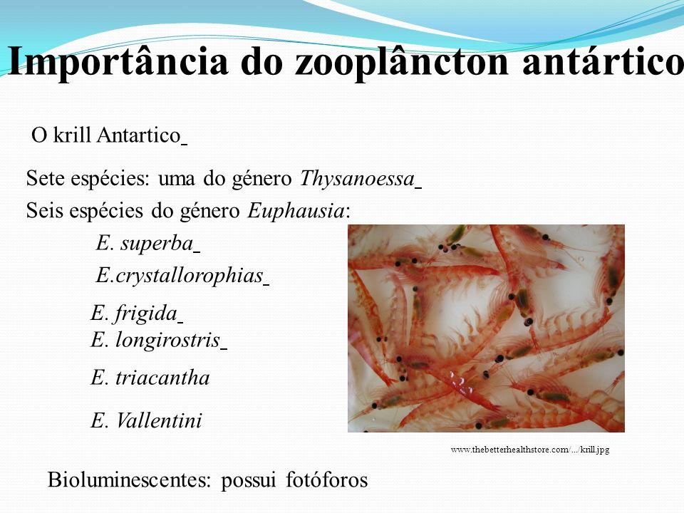 Importância do zooplâncton antártico