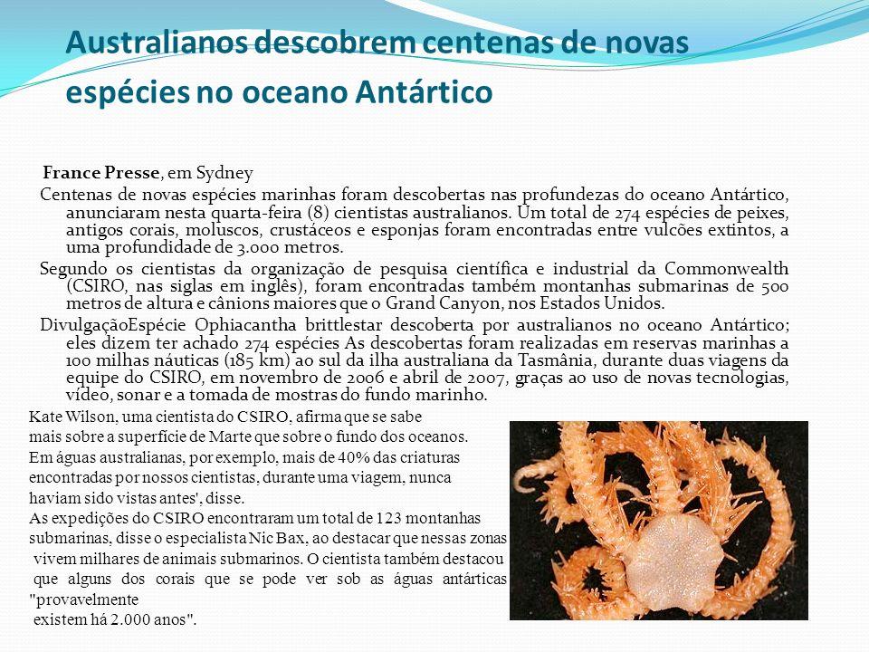 Australianos descobrem centenas de novas espécies no oceano Antártico