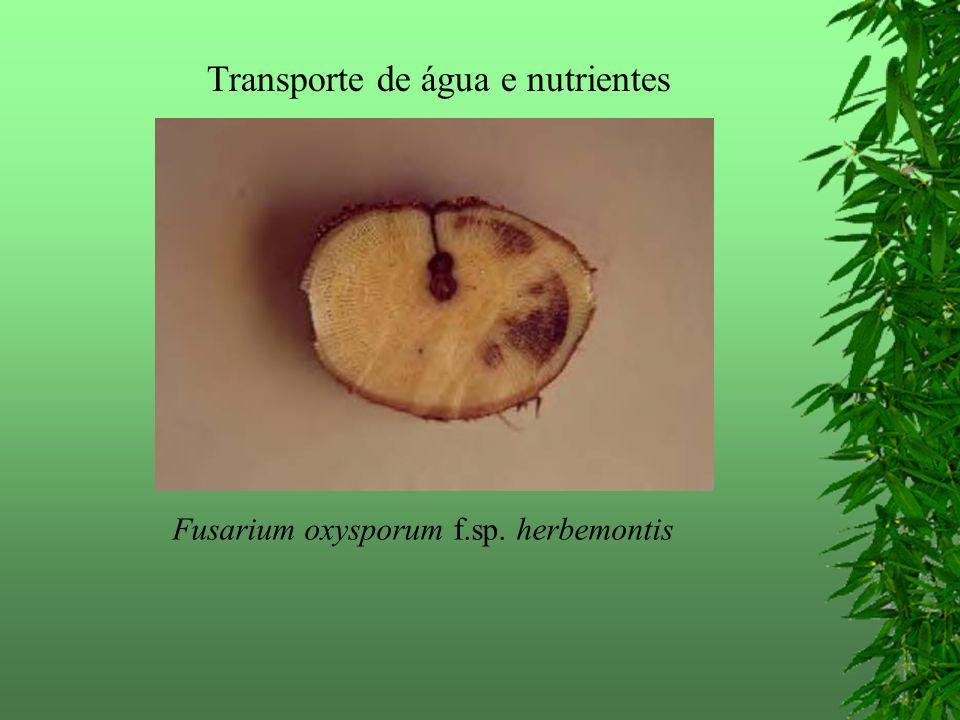 Transporte de água e nutrientes