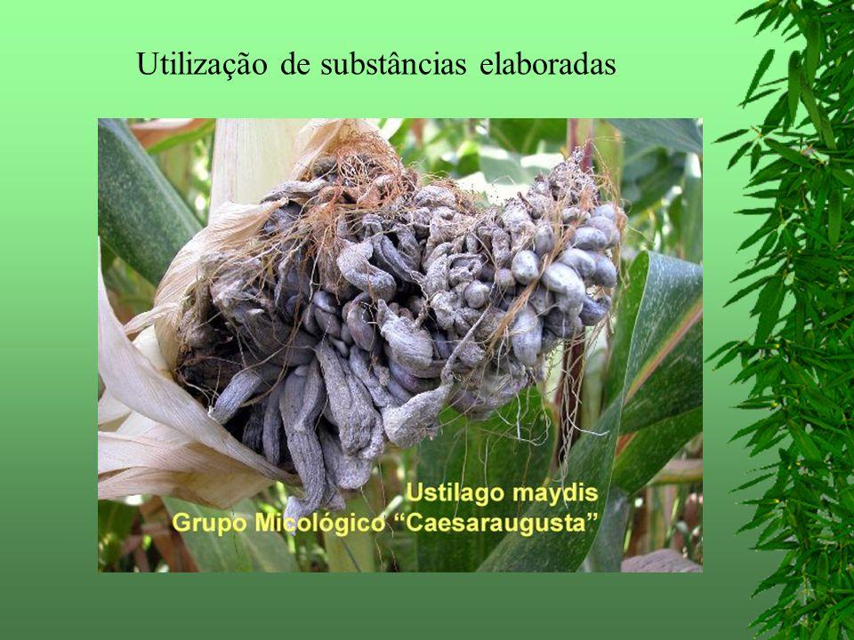 Utilização de substâncias elaboradas