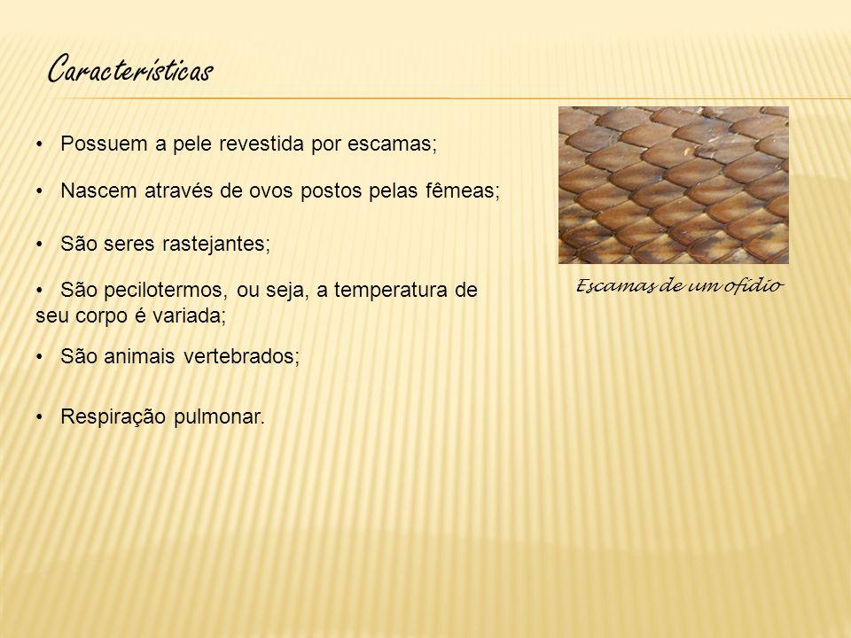 Características Possuem a pele revestida por escamas;