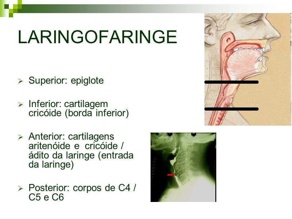 LARINGOFARINGE Superior: epiglote
