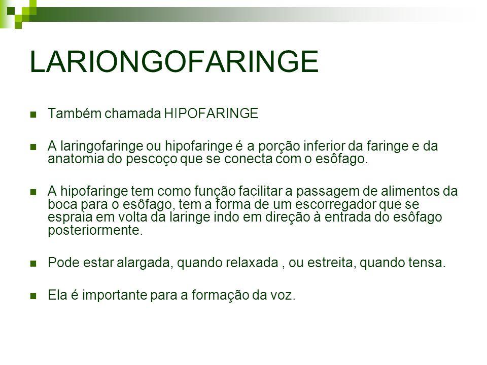 LARIONGOFARINGE Também chamada HIPOFARINGE
