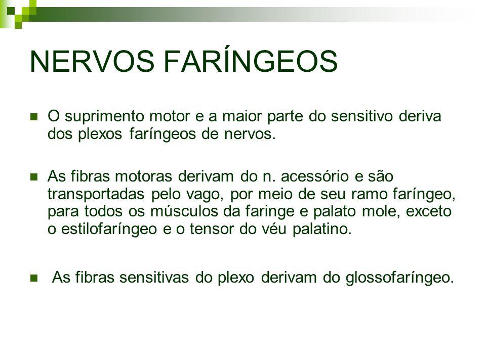 NERVOS FARÍNGEOS O suprimento motor e a maior parte do sensitivo deriva dos plexos faríngeos de nervos.