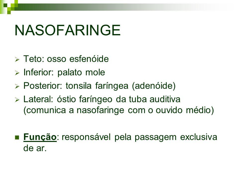 NASOFARINGE Teto: osso esfenóide Inferior: palato mole