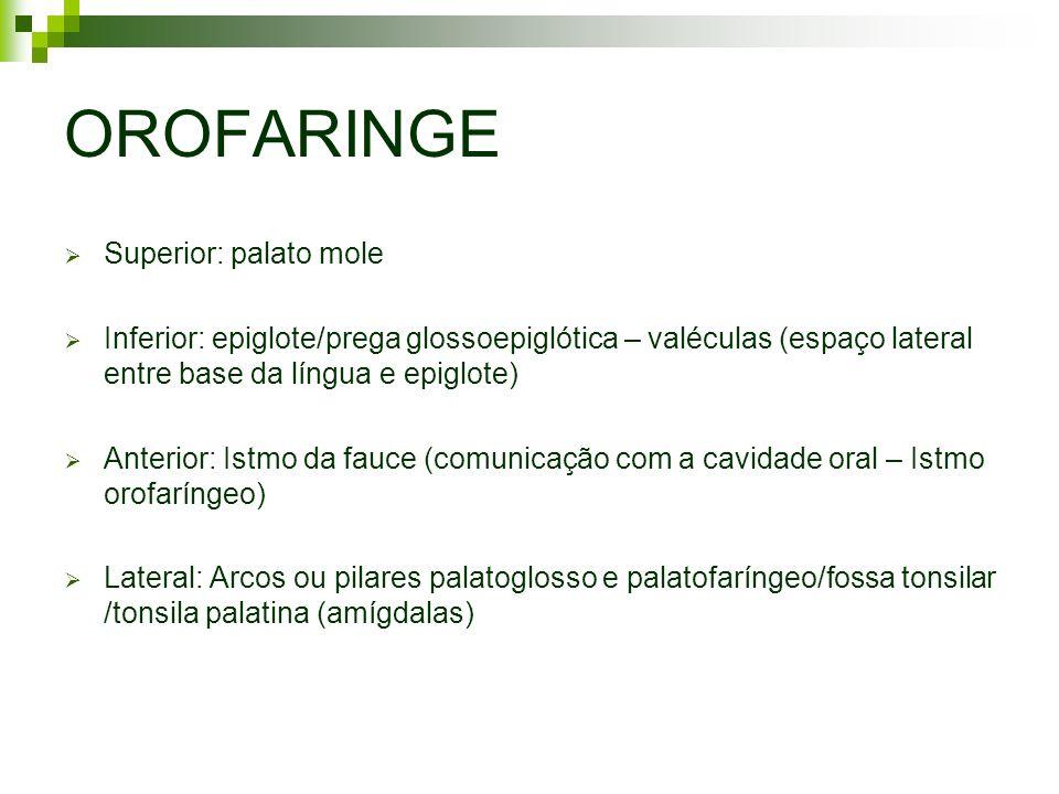 OROFARINGE Superior: palato mole