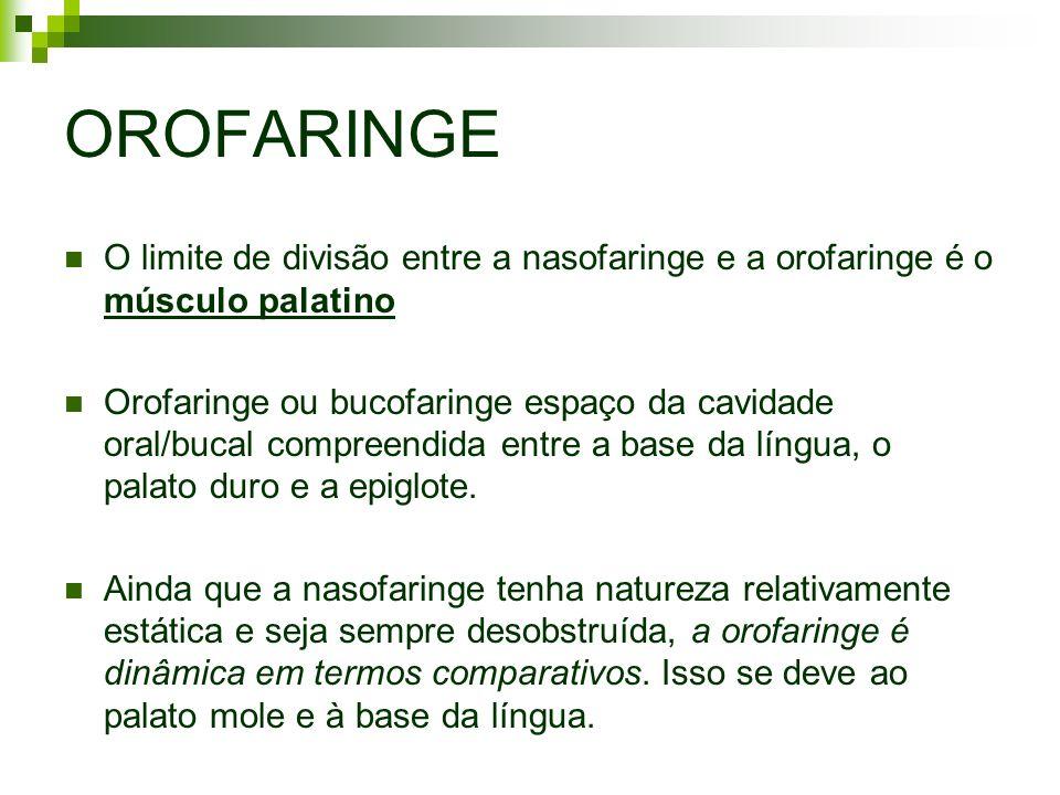 OROFARINGE O limite de divisão entre a nasofaringe e a orofaringe é o músculo palatino.