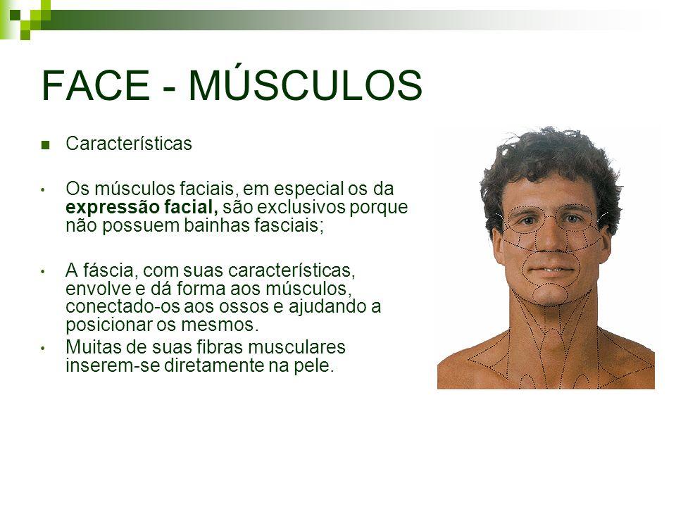 FACE - MÚSCULOS Características