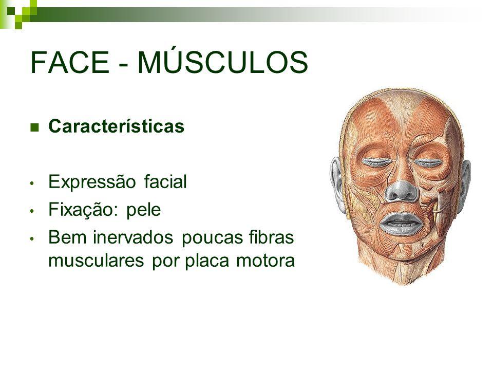 FACE - MÚSCULOS Características Expressão facial Fixação: pele