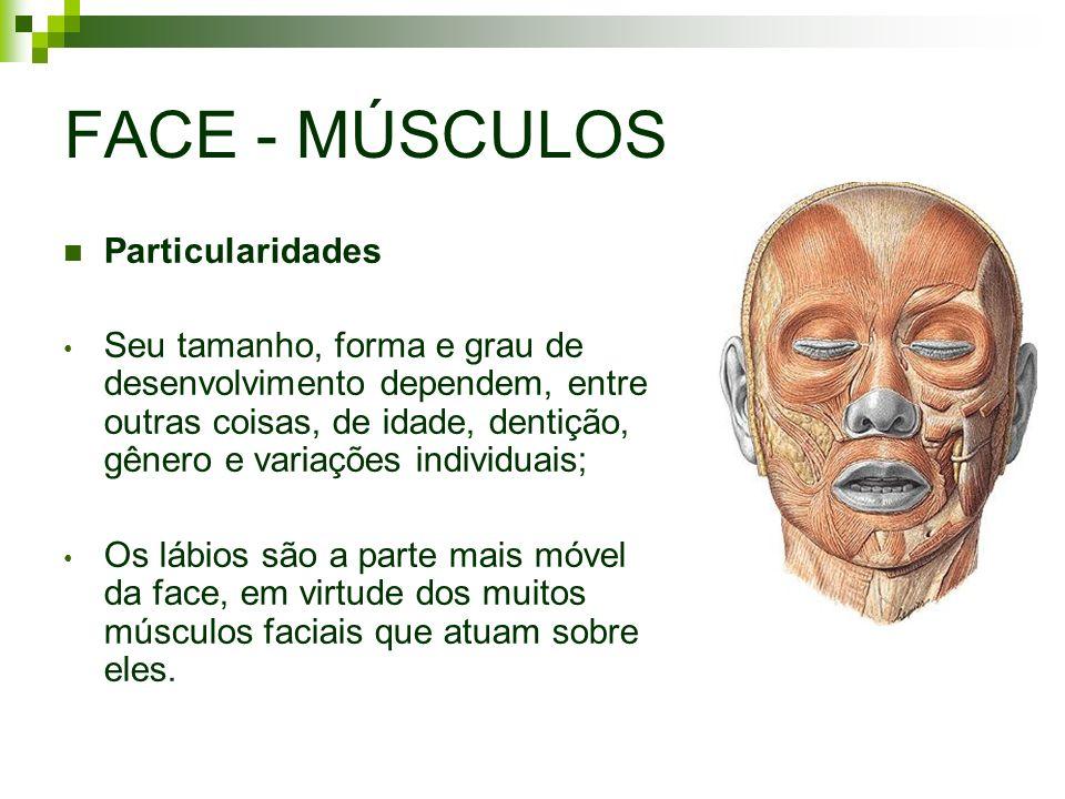 FACE - MÚSCULOS Particularidades