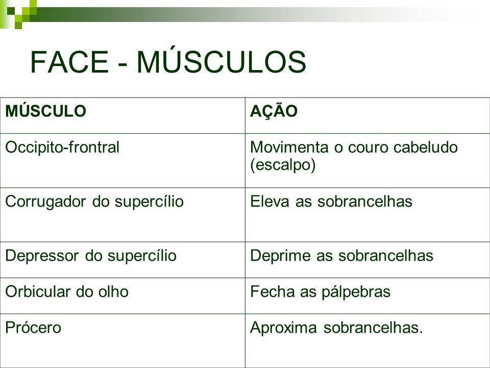 FACE - MÚSCULOS MÚSCULO AÇÃO Occipito-frontral