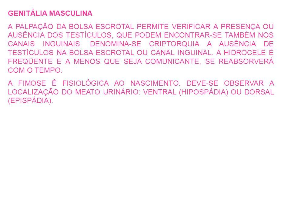 GENITÁLIA MASCULINA