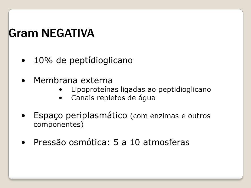 Gram NEGATIVA 10% de peptídioglicano Membrana externa