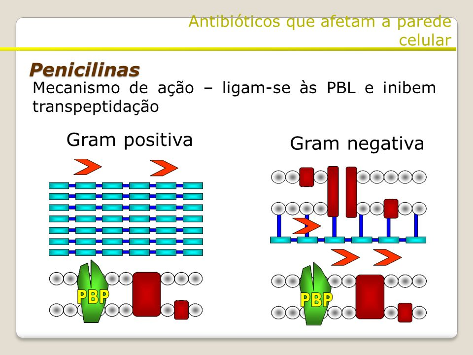 Penicilinas Gram positiva Gram negativa