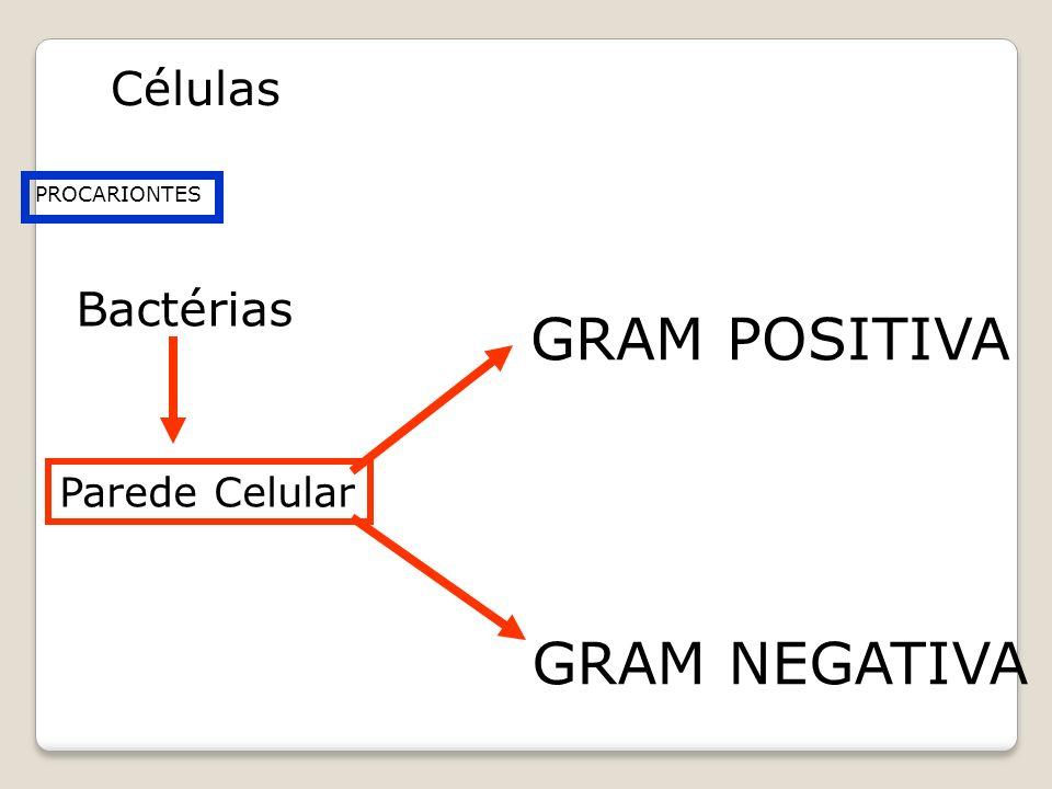 GRAM POSITIVA GRAM NEGATIVA Células Bactérias Parede Celular