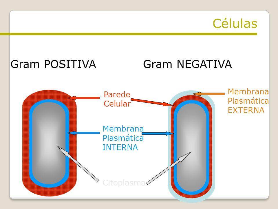 Células Gram POSITIVA Gram NEGATIVA Membrana Parede Plasmática Celular